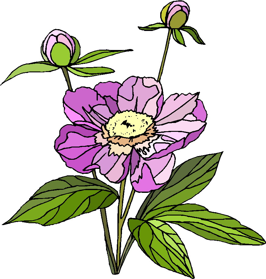 Plant Clipart Gallery2