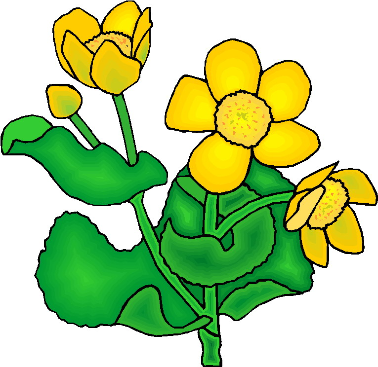 Plant Clipart Gallery3