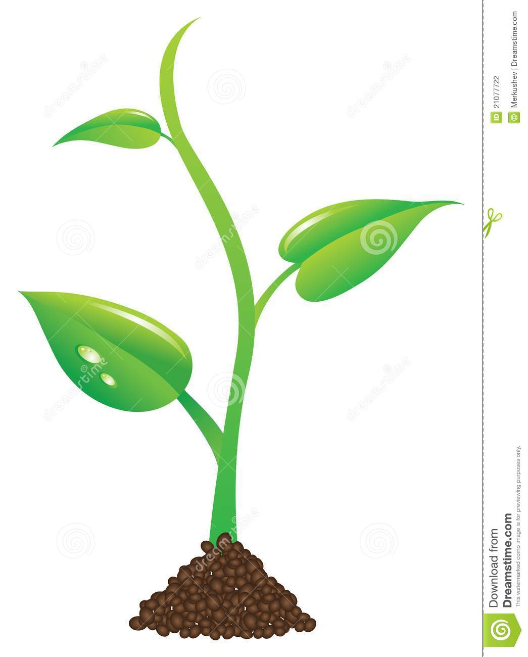 Plant With Roots Clipart   Clipart Panda   Free Clipart Images