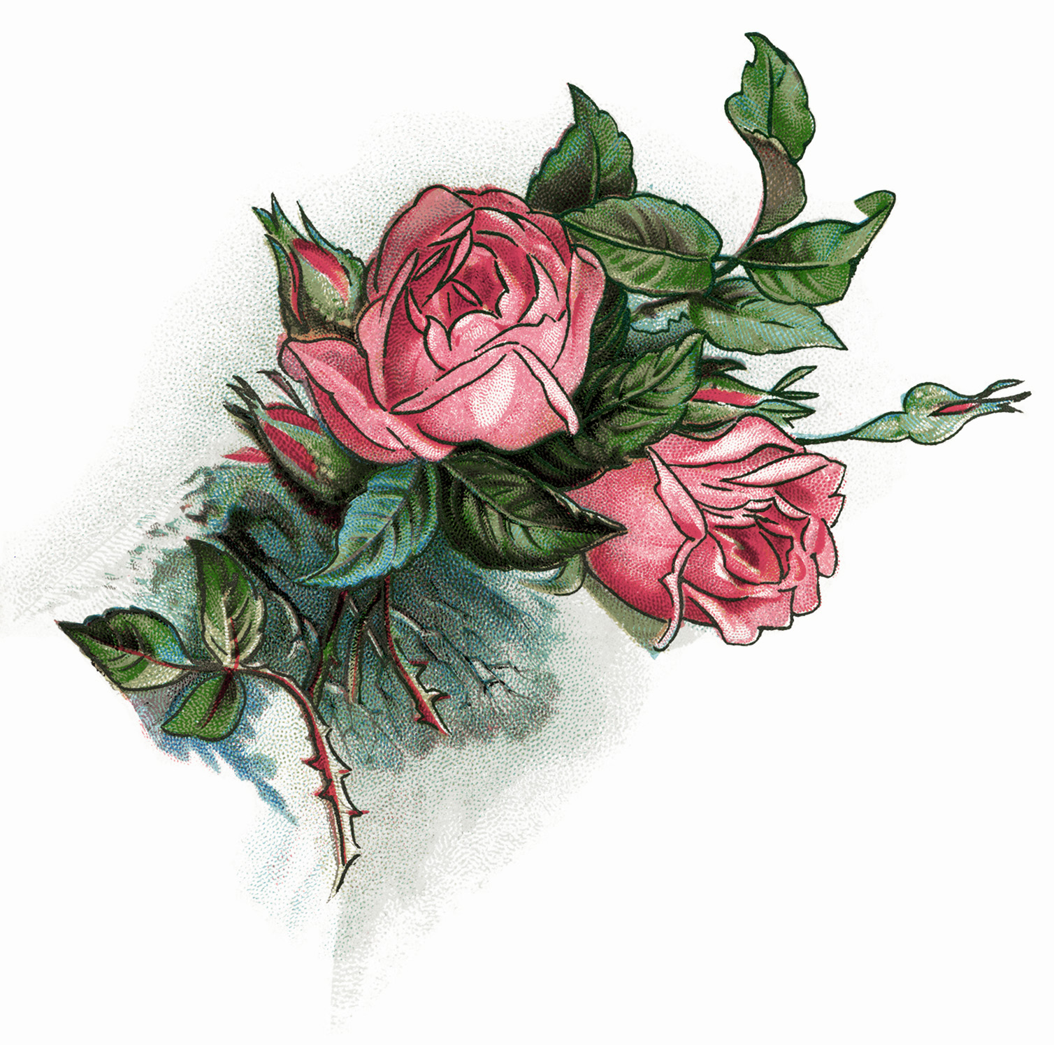 And Lilies Longfellow Pink Rose Graphics Free Vintage Clip Art Rose