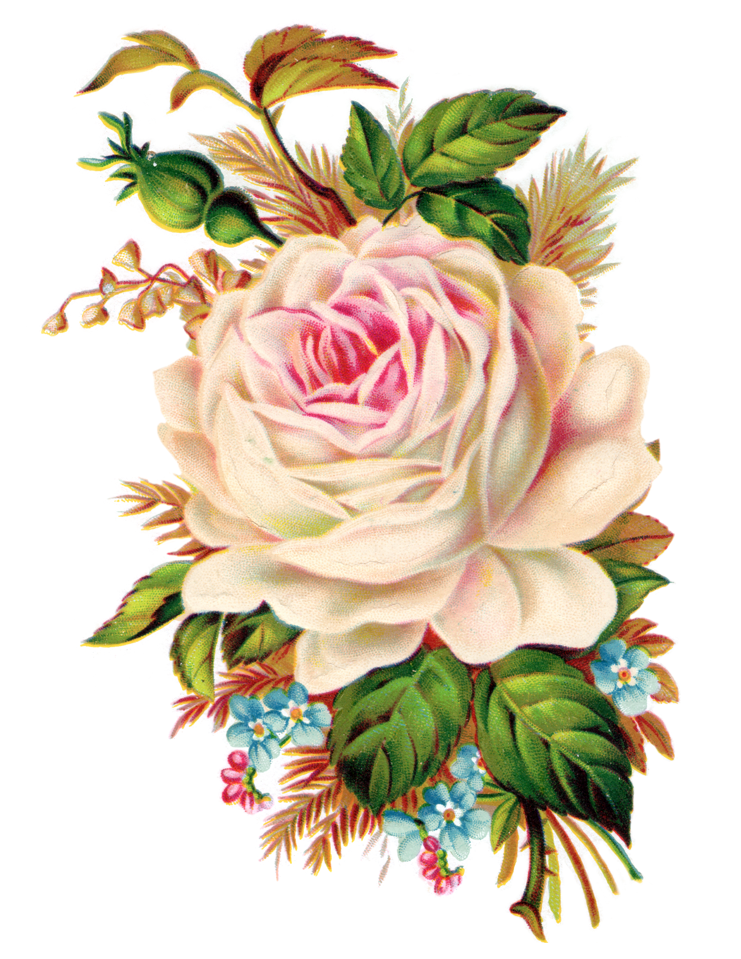Clip Art  Royalty Free Gorgeous Vintage Rose Image   Free Pretty