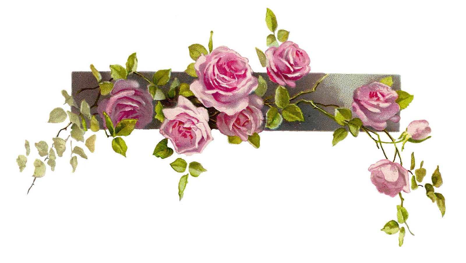 Free Flower Graphic  Vintage Pink Rose Clip Art Branch And Leaves
