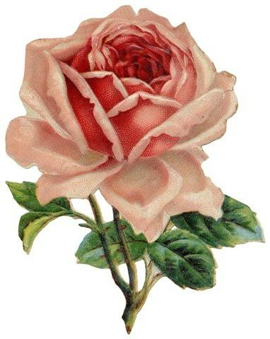 Go Back   Gallery For   Vintage Rose Clip Art