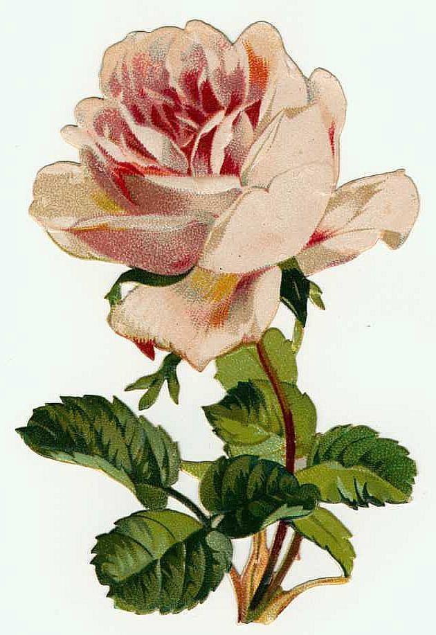 Pink Vintage Rose Clip Art