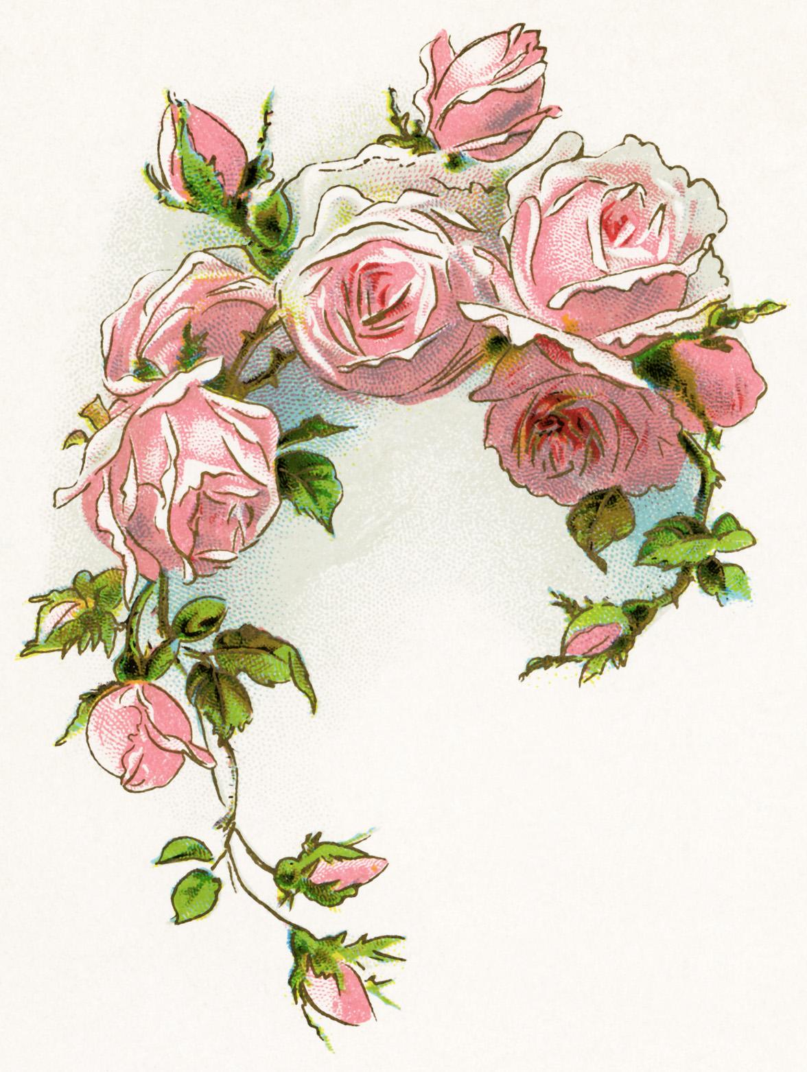 Vintage Rose Clipart - Clipart Kid