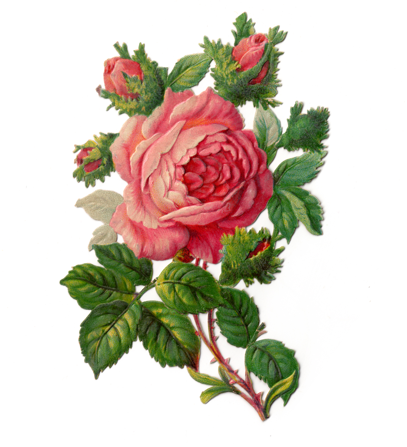 Victorian Rose Borders Clipart - Clipart Kid