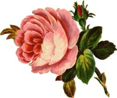 Vintage Rose Clip Art Vintage Rose Decoupage