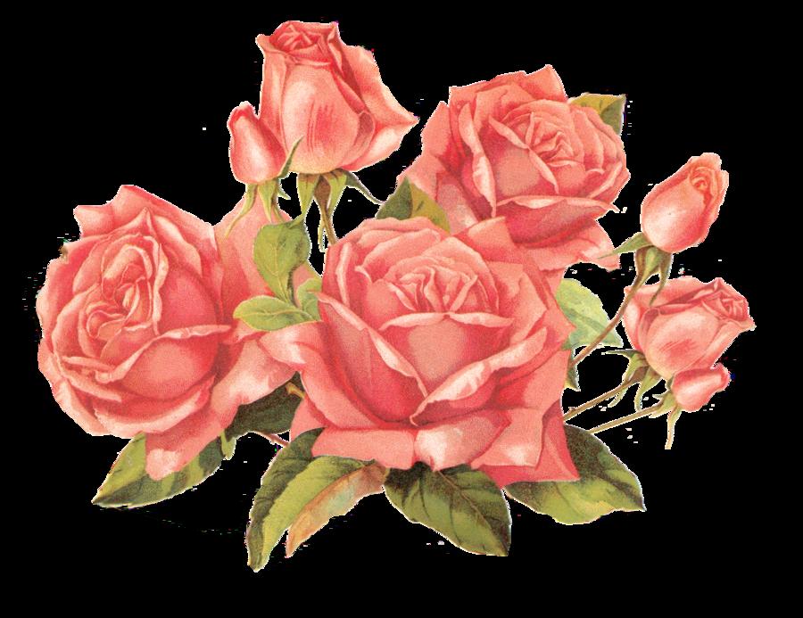 Vintage Roses Clip Art Vintage Clip Art French Vintage Roses Clip Art