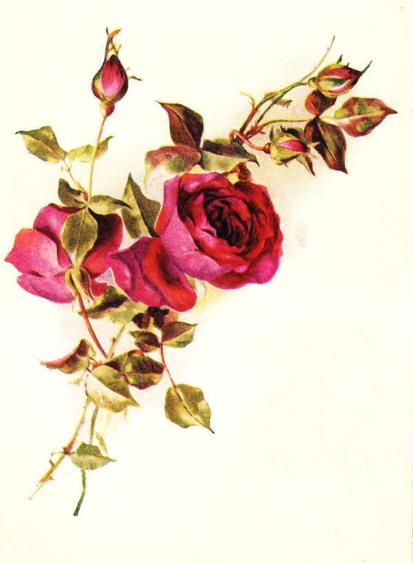 Vintage Roses Red By Jinifur On Deviantart