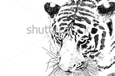 Download Source File Browse   Animals   Wildlife   Tiger Head Vector