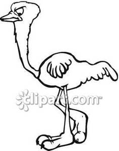 Black And White Ostrich With Big Feet   Royalty Free Clipart Picture