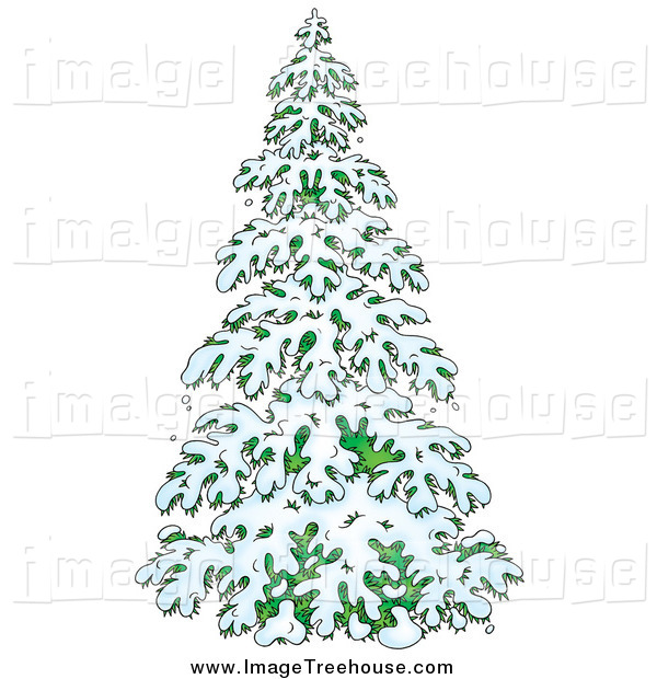 evergreen tree clipart clipart suggest