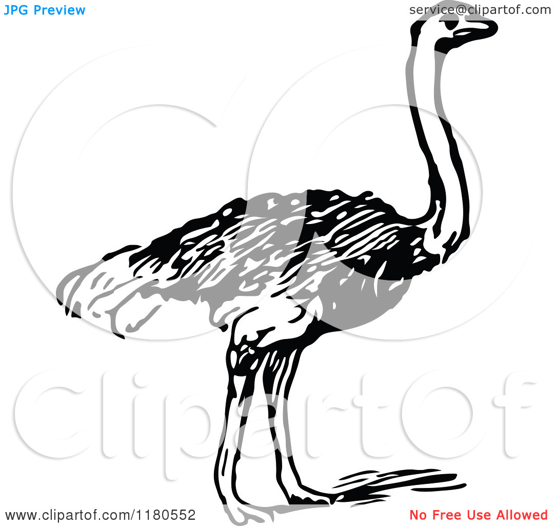 Ostrich Clipart Black And White Clipart Of A Retro Vintage Black And