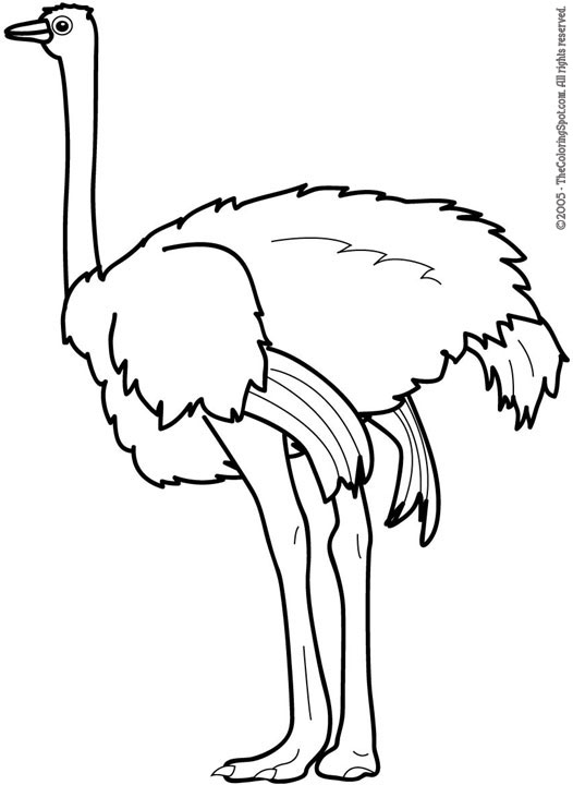 Clip Art Ostrich Clipart ostrich black and white clipart kid panda free images
