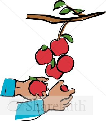 Hands Harvesting Apples   Church Activity Clipart