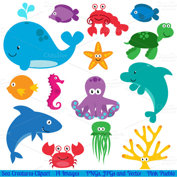 Sea Animals Vectors And Clipart   Illustrations On Creative Market