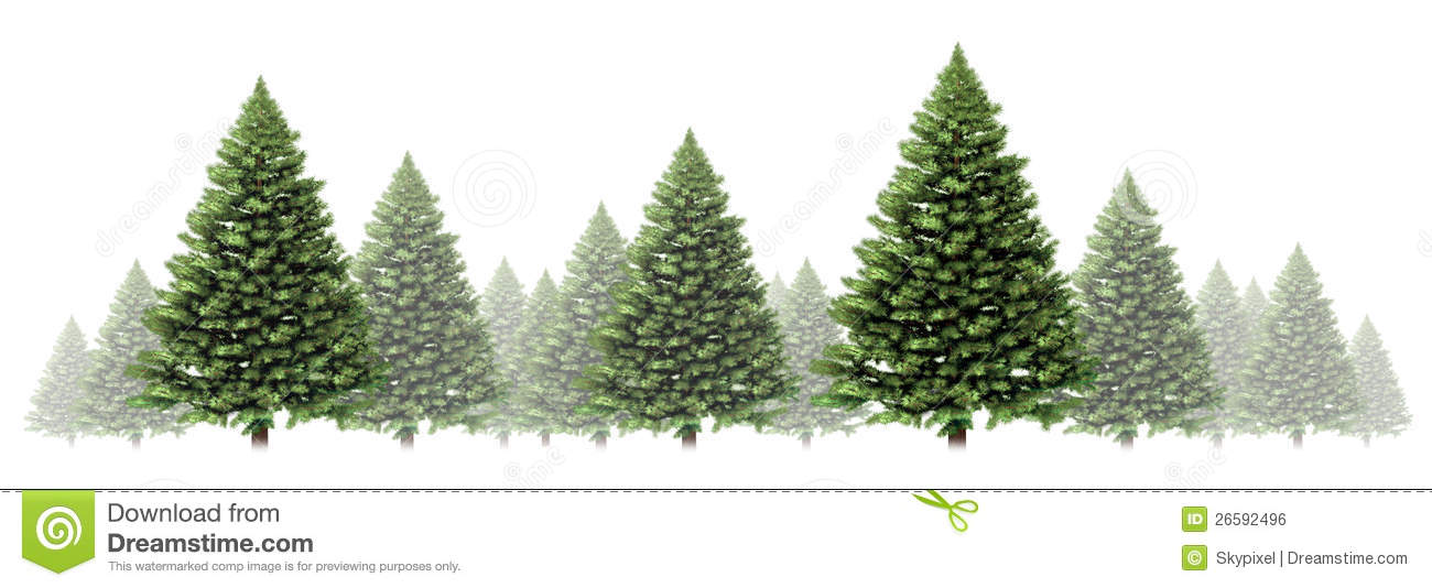 Pine Tree Winter Border Design With A Group Of Green Christmas Trees