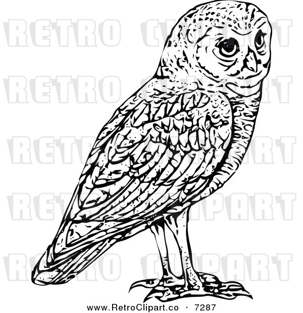 Vector Clipart Of A Retro Black And White Owl By Prawny Vintage