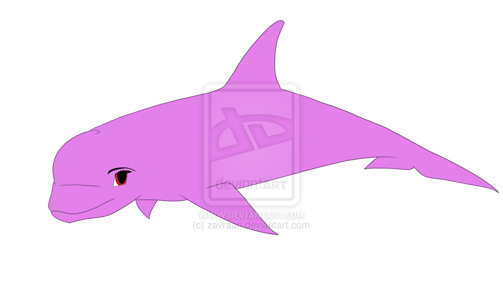 Bottlenose Dolphin Drawing   Clipart Panda   Free Clipart Images