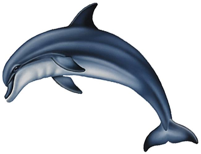 Bottlenose Dolphin Drawing Wallpaper Bottlenose Dolphin By Lool705
