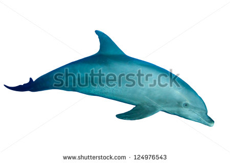 Bottlenose Dolphin Jumping Stock Photo Bottlenose Dolphin Isolated On