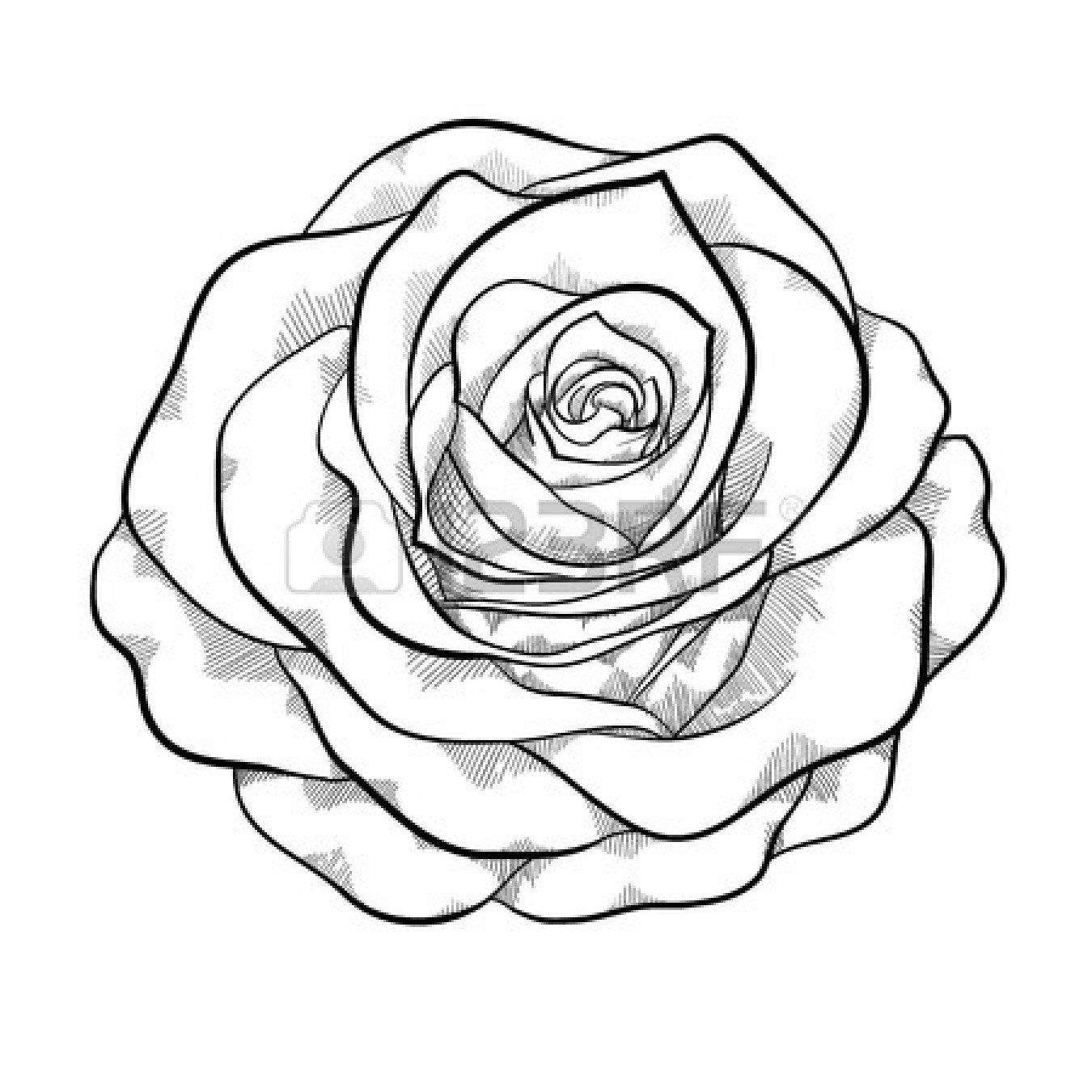 Black And White Rose Clipart - Clipart Suggest