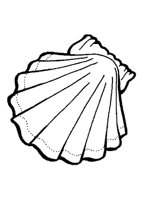 Clam Drawing Oysters Outline Clipart Kid
