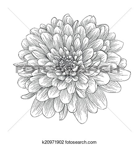 Clipart Of Beautiful Monochrome Black And White Dahlia Flower Isolated
