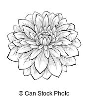 Cliparts Et Illustrations Sur Dahlia