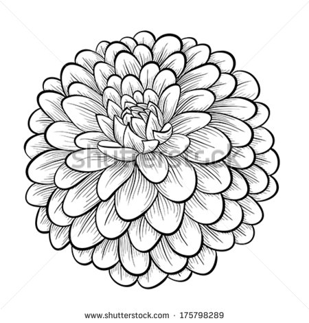 Dahlia Stock Photos Dahlia Stock Photography Dahlia Stock Images