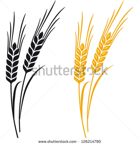 Ears Of Wheat Barley Or Rye Vector Visual Graphic Icons Ideal For