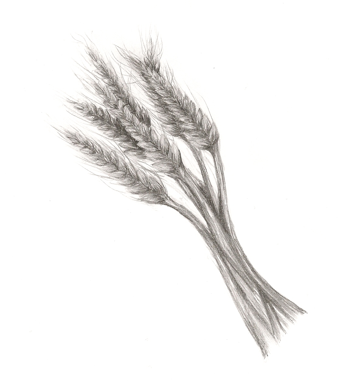 Sheaf Of Wheat By Chelsea Templin