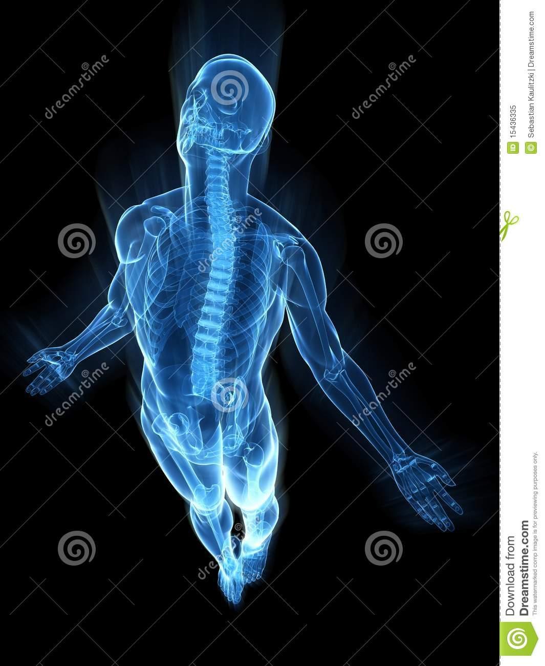 Body X-ray Clipart - Clipart Kid