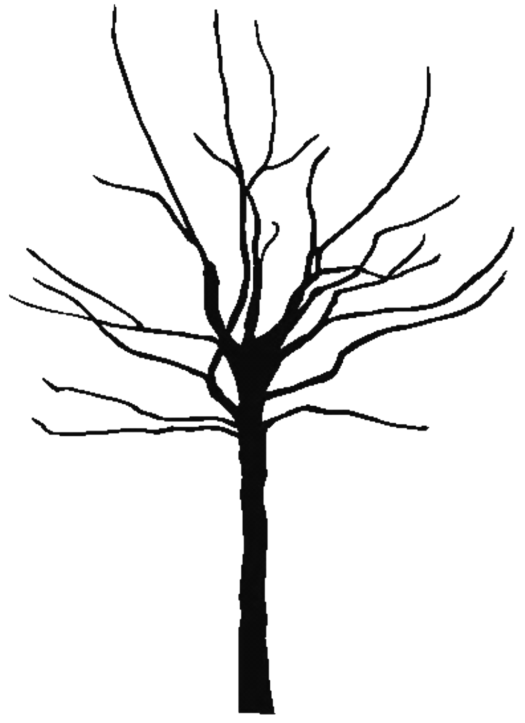 Bare Tree Silhouette   Clipart Best
