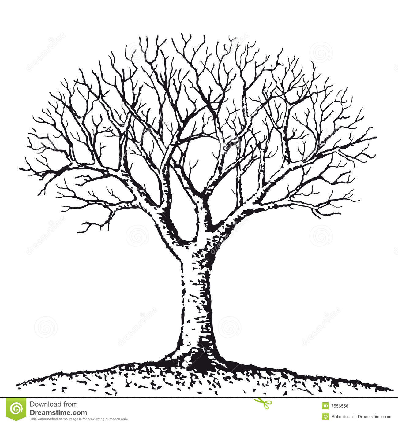 Bare Tree  Vector  Royalty Free Stock Photos   Image  7556558