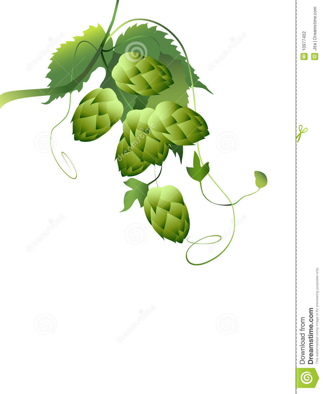 beer hops vine clipart clipart suggest