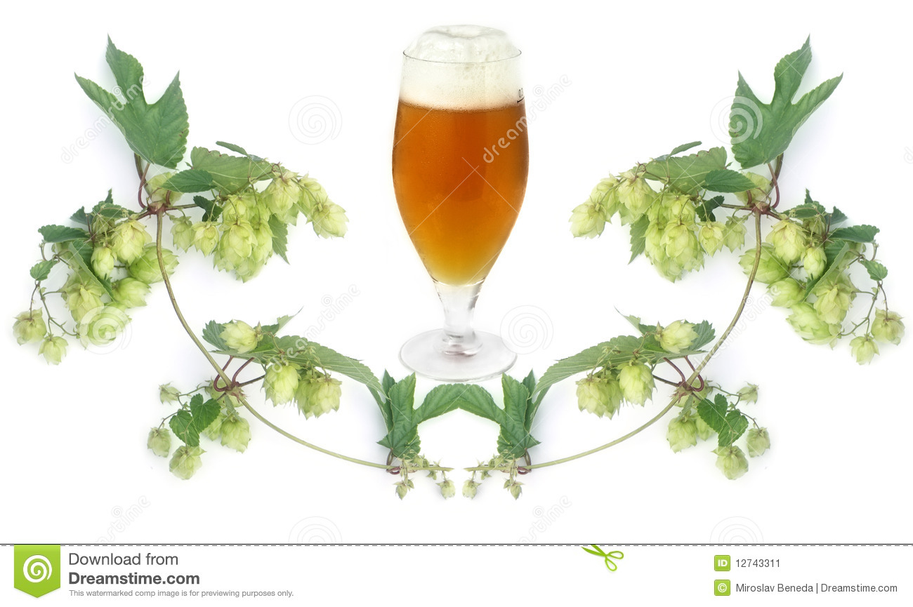 Beer Hop Clipart Beer And Hops Plant