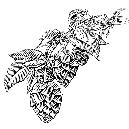 Beer Hops Drawings And Ink Food Beverage Hops