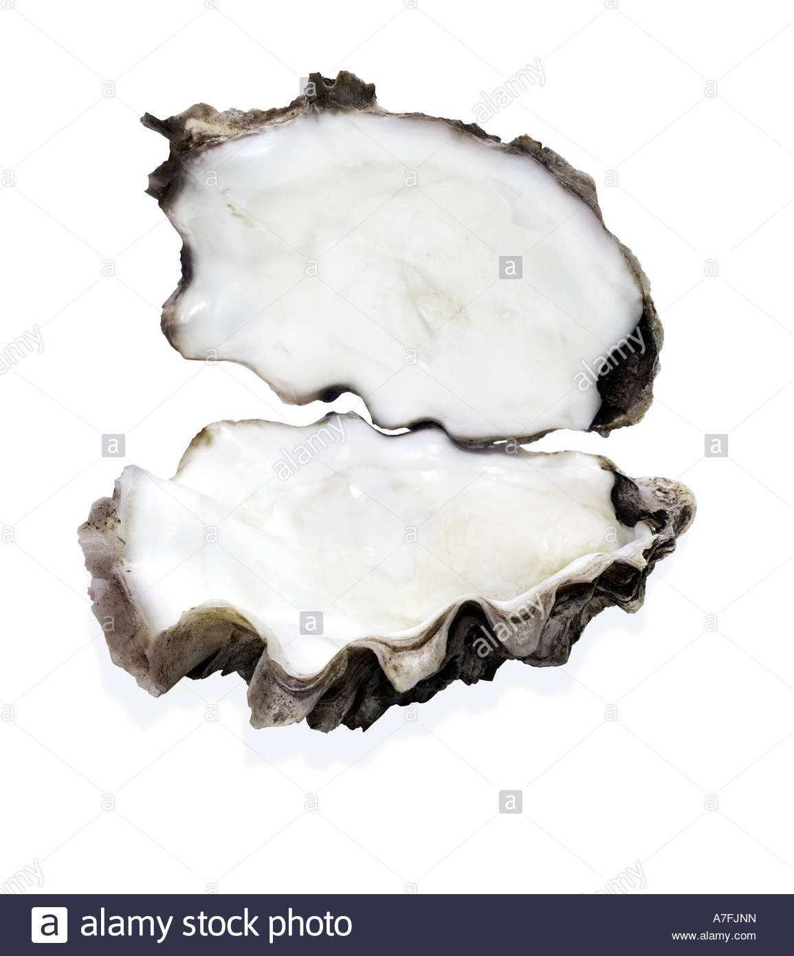 Open oyster shell with pearl
