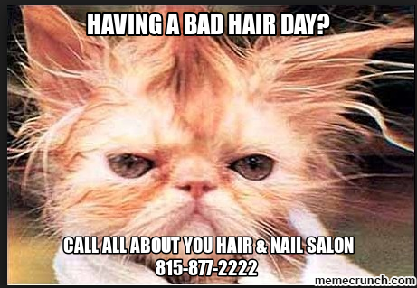 Cat Bad Hair Day