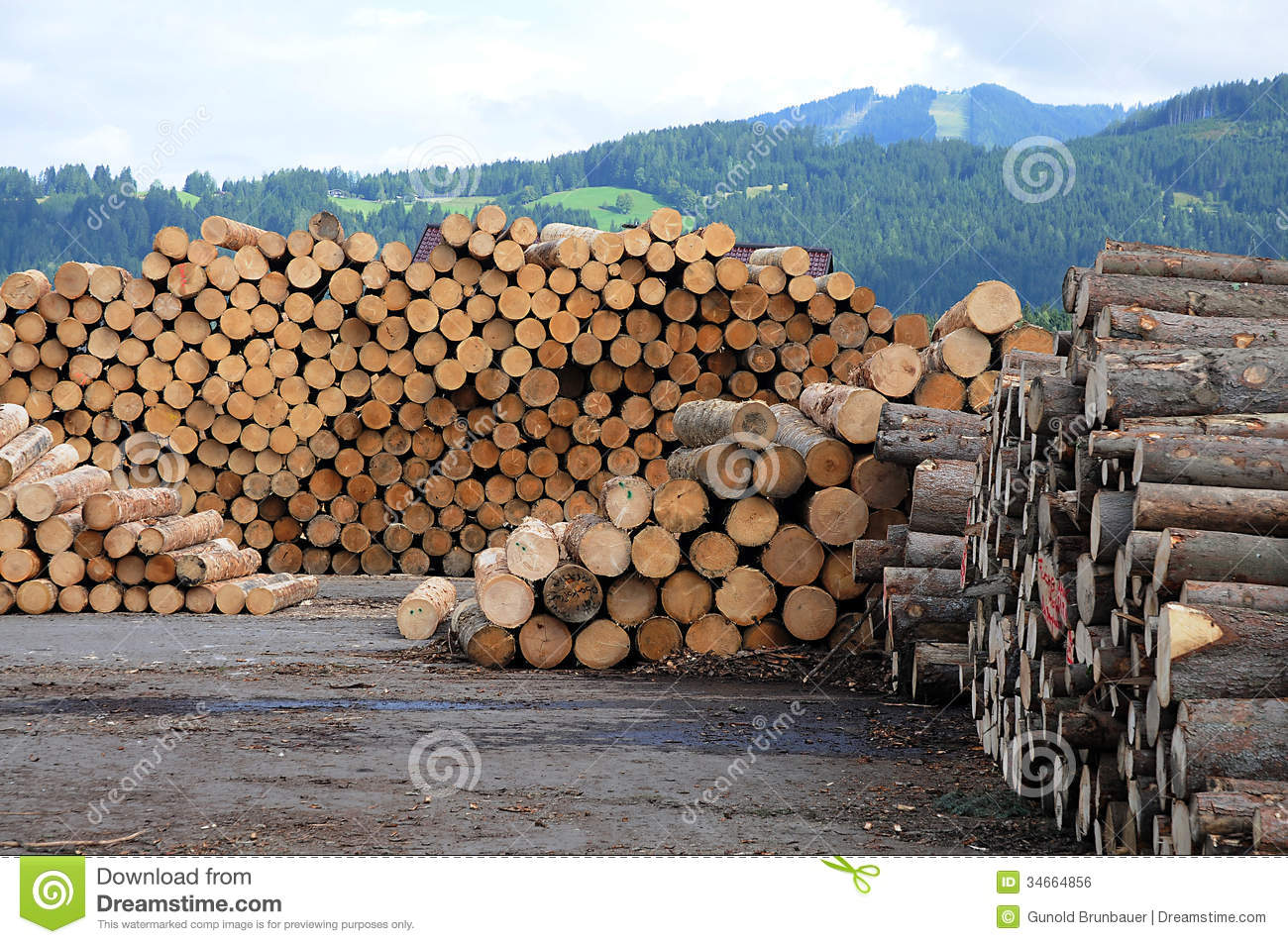 Pile Of Cut Lumber Wood In Front Of The Mountains In Austria