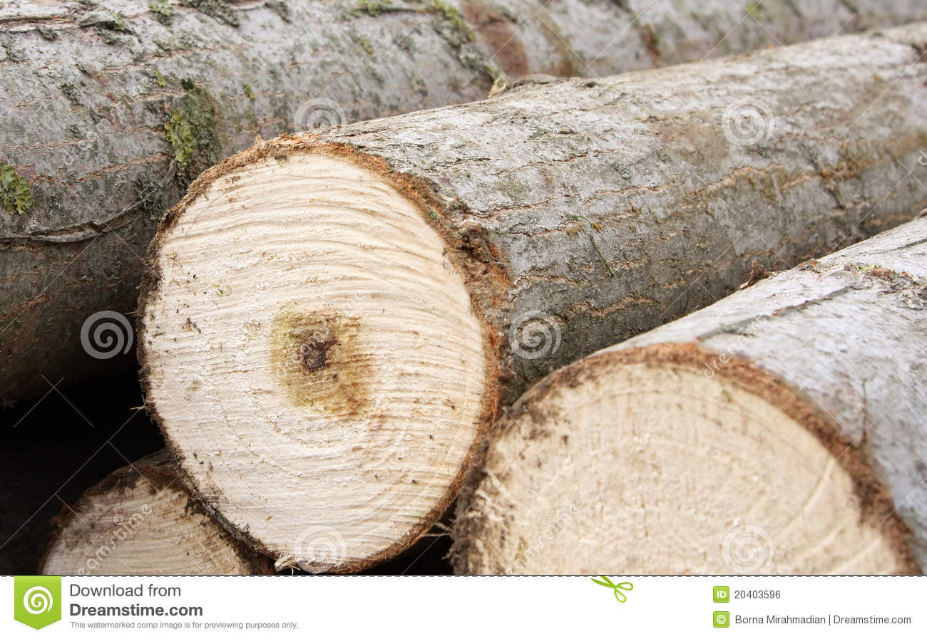 Pile Of Lumber Cut From The Forest