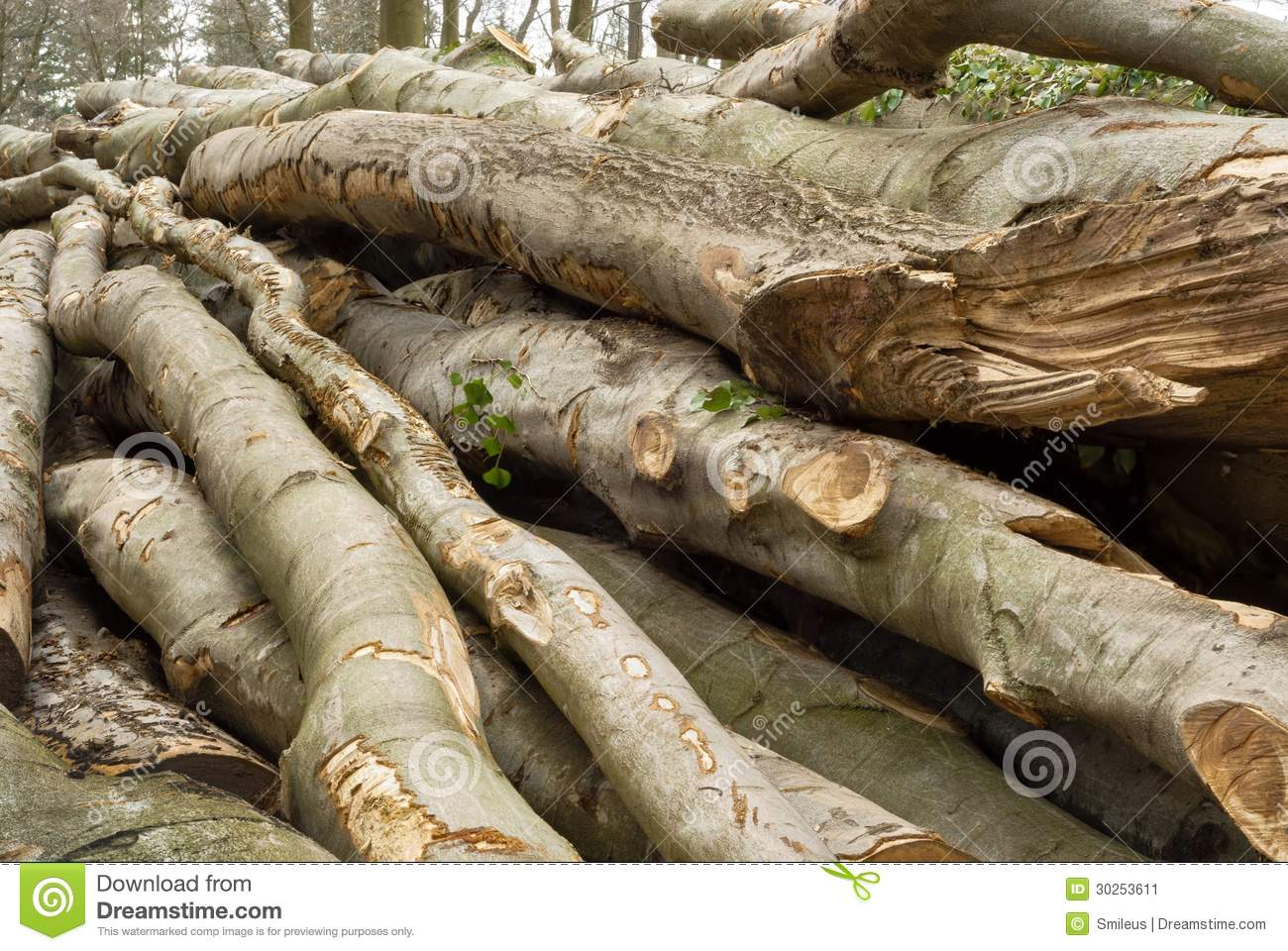 Pile Of Lumber In A Forest Shot In Soft Daylight