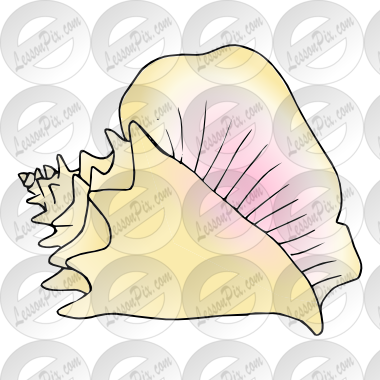 Conch Picture For Classroom   Therapy Use   Great Conch Clipart