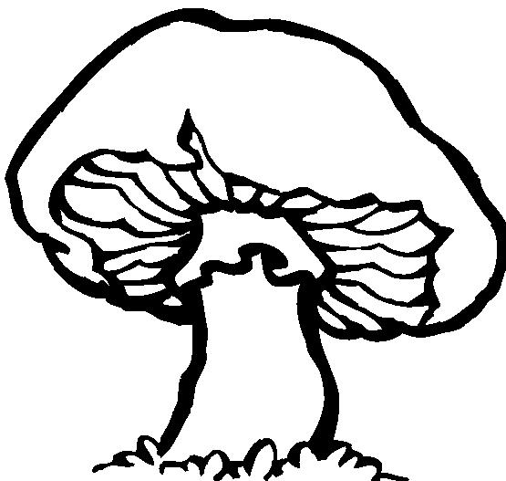 Black And White Mushroom Clipart - Clipart Kid