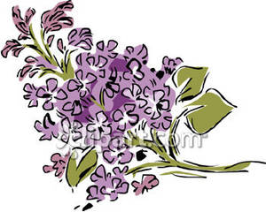 Lilac Branch   Royalty Free Clipart Picture