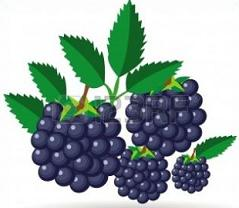 Tags Blackberries Blackberry Pie Did You Know The Blackberry Is A