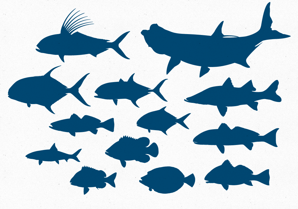 Free Vector File 13 Inshore Game Fish Silhouettes   The Creative