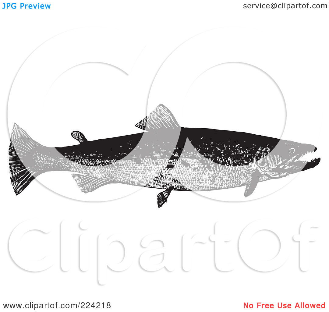 Royalty Free  Rf  Clipart Illustration Of A Black And White Trout Fish