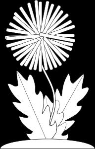Dandelion Flower Bw